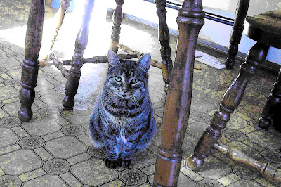 Tabby politely waiting to be noticed