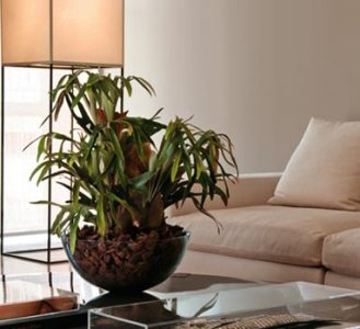 plantas%2B %2B5 Plantas na Sala de Estar