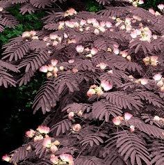 drevo │ ozeleni rdeče │ vsako pomlad