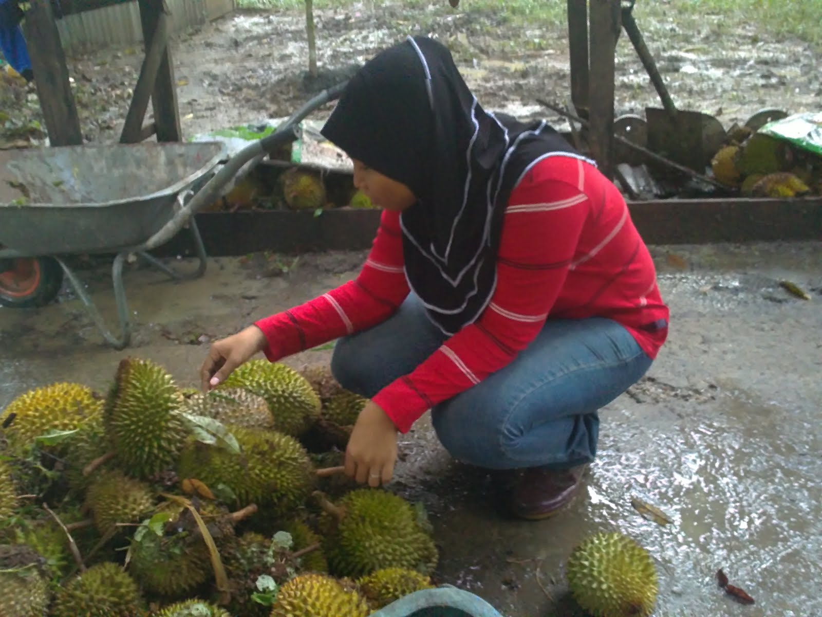 Dusun Durian, Sungkai