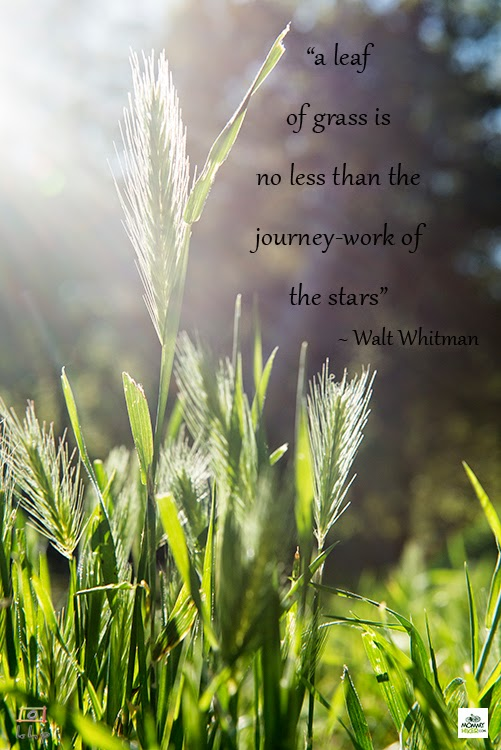 Inspirational Nature Quote - Walt Whitman