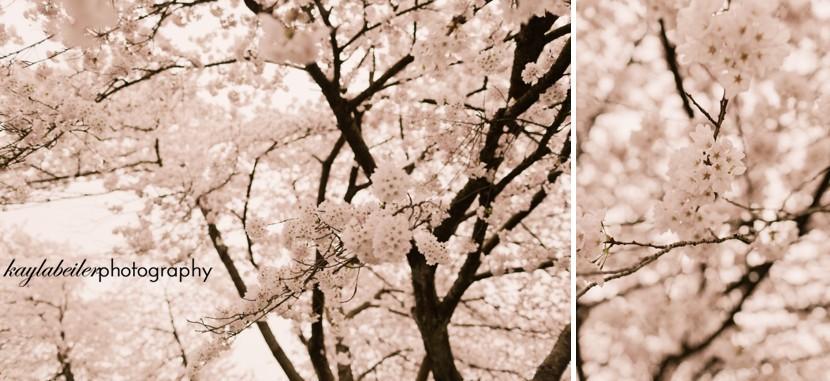 Queen Elizabeth Park Engagement Photo