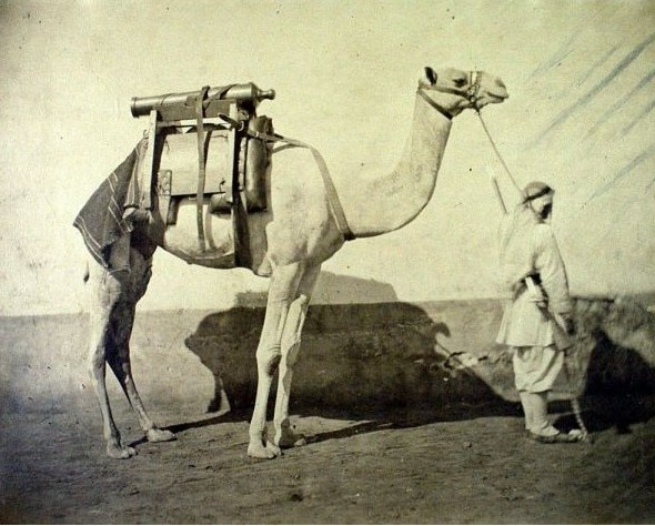 Camel transporting artillery, Egypt (1866), by Gustave Le Gray