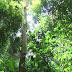 Indo bắt người Việt ăn trộm gỗ quý