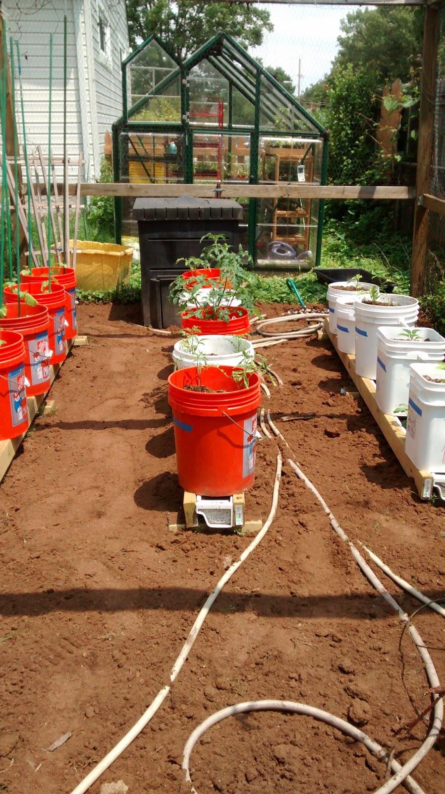 Grow It Eat It: Rain Gutter Grow System