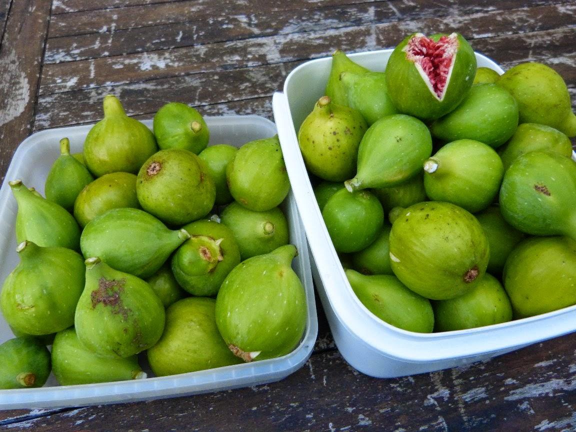 Ma récolte de figues blanches du jardin