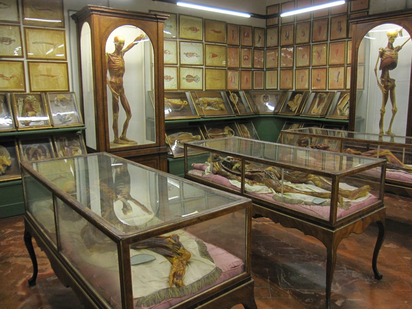 Un dermatólogo en el museo: El Museo della Specola. Florencia.
