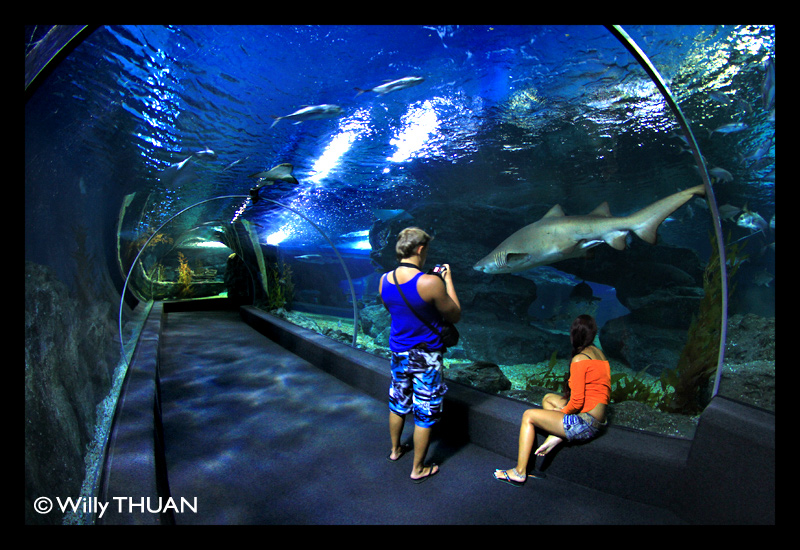Siam Ocean World at Siam Paragon - Bangkok Blog