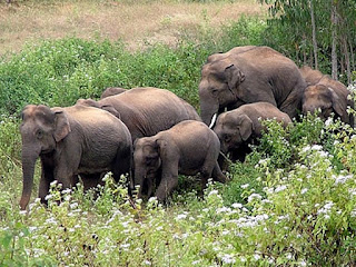 Elephants preserved in Dalma Wildlife Sanctuary