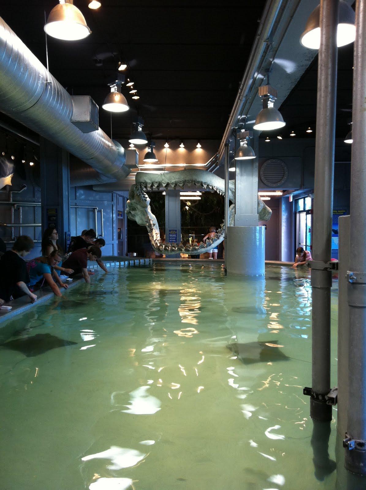 The Sedentary Traveller The Kemah Aquarium