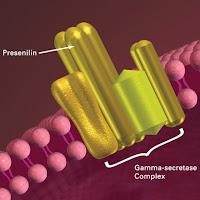 Gamma-secretase complex