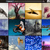 [News] Pixels.com Launches New iPad App for Photo and Art Enthusiasts