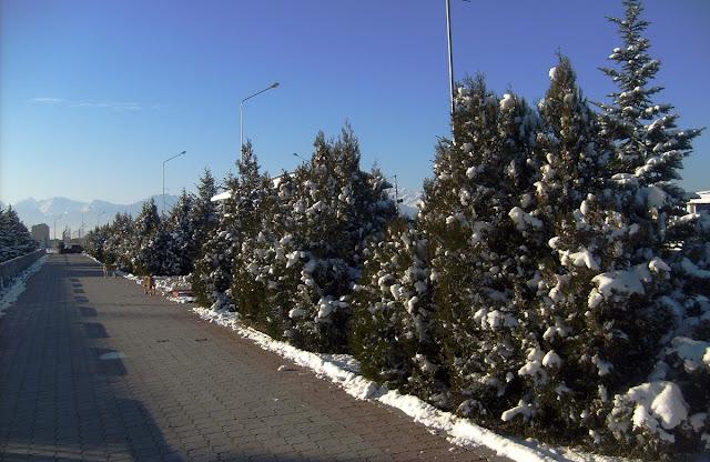 Заснеженные улицы Магаса. Кавказ. Ингушетия