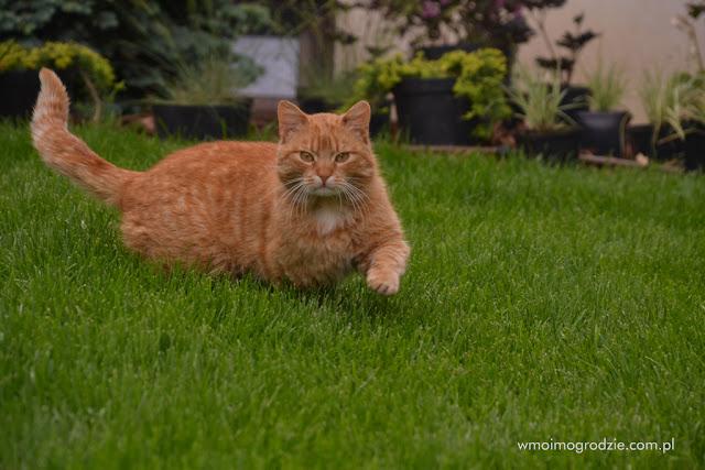profesjonalne zakładanie trawnikow