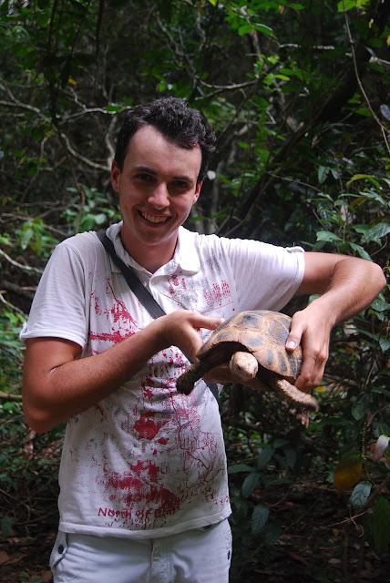 Черепаха в парке Tiger Cave Temple, Krabi, Thailand.