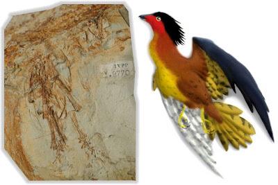 aves del cretaceo Boluochia