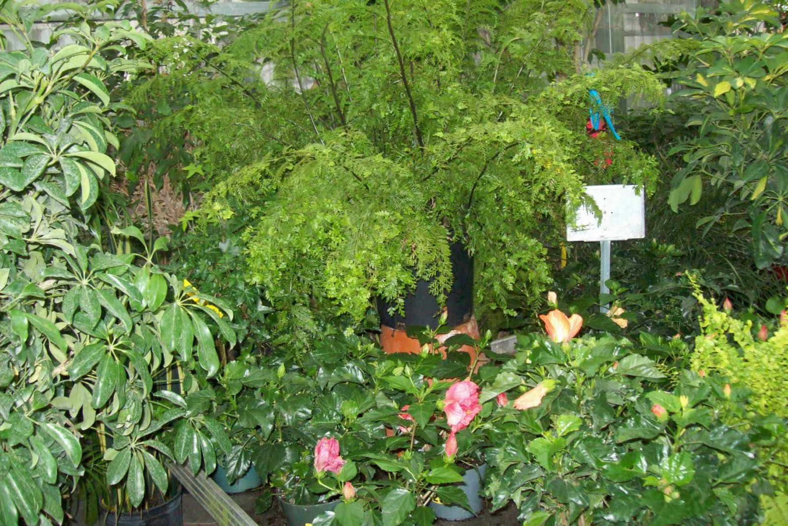 Life in a Deer Yard: HOUSE PLANTS (LIGHT&TEMPERATURE&HUMIDITY) #90A328