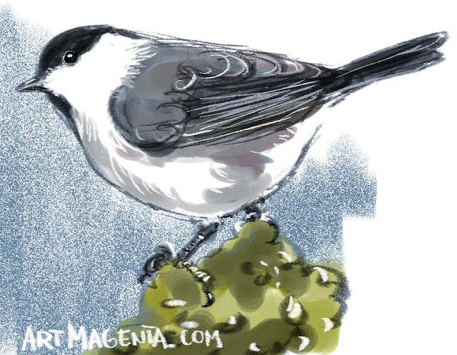 Willow Tit sketch painting. Bird art drawing by illustrator Artmagenta.