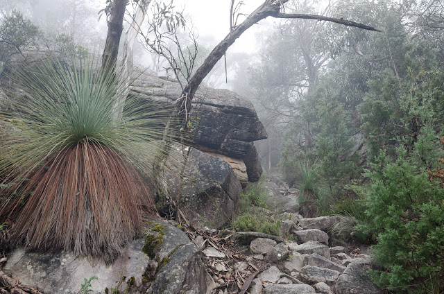 grass tree next to mount difficult range track