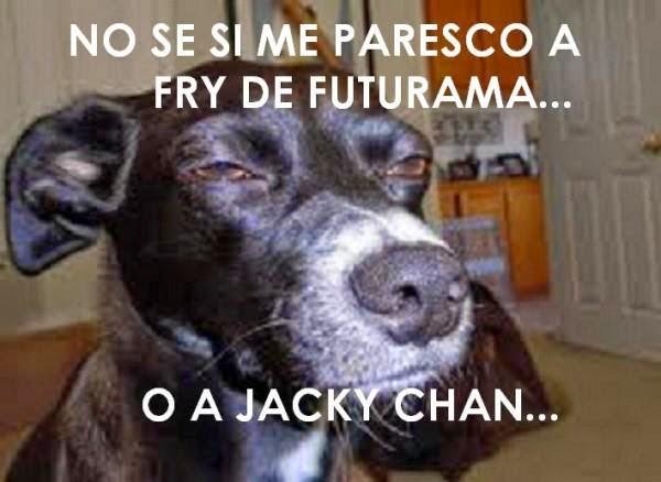 No se si me paresco a Fry de futurama o a Jacky Chan