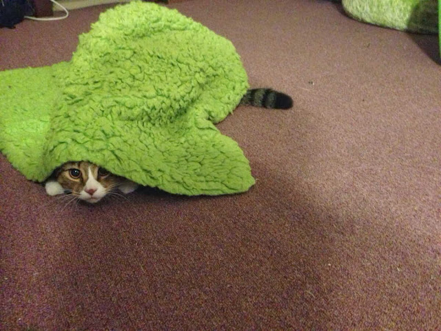 Funny cats - part 85 (40 pics + 10 gifs), cat hides under a towel