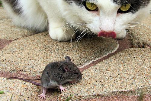 "<img src=""gato.jpg"" alt=""gato para auyentar los ratones"">"