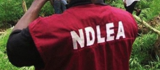 NDLEA arrests 11 school children over drug abuse and trafficking