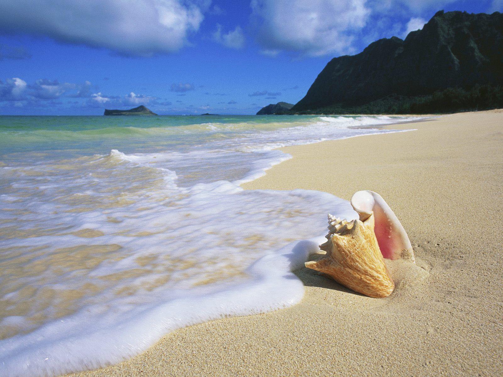 http://2.bp.blogspot.com/-3yBxXIKER2U/TcecF9TGYzI/AAAAAAAAAYg/WiMi20Yb6Ck/s1600/Conch_Shell_Oahu_Hawaii.jpg