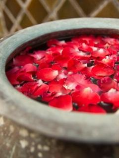 mengobati jerawat dengan bunga mawar