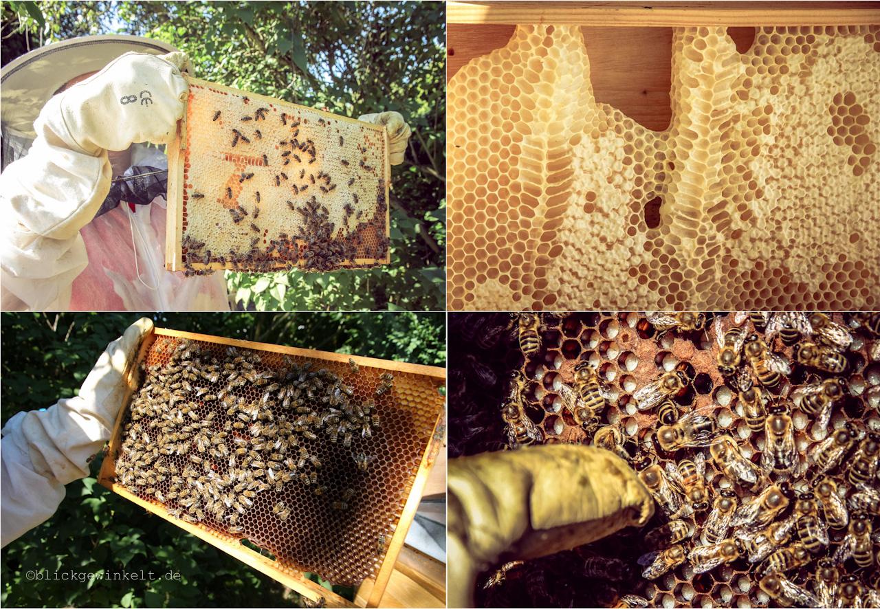 Bienenflüsterin