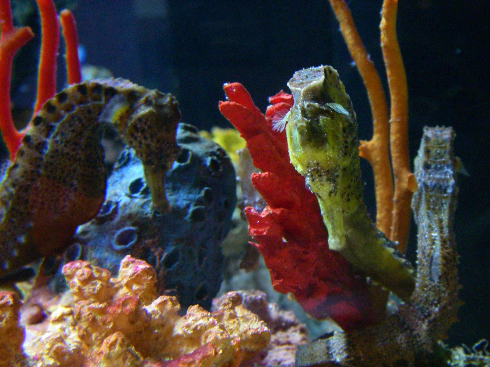 Seahorse tank related keywords seahorse tank long tail for Seahorse fish tank