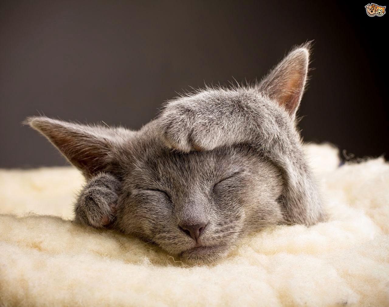 Hasil gambar untuk cat sick signs