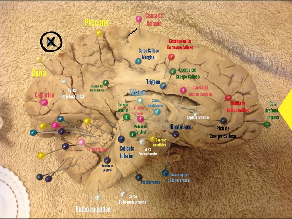 Fantástico Anatomía Examen Práctico Galería - Imágenes de Anatomía ...