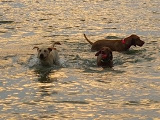 Early morning swim at the lake with with Abby