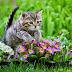 Perhatikan Gambar Kucing Lucu dan Imut Ini !