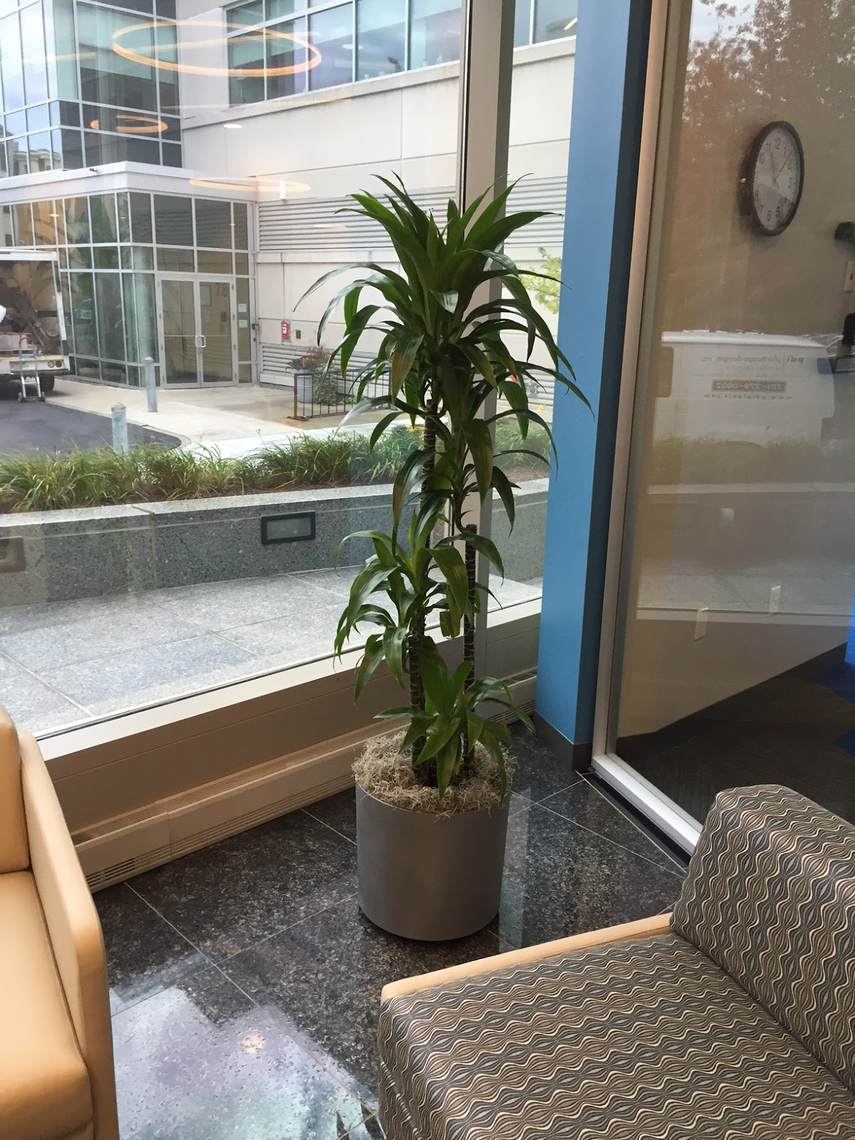 Indoor Office Plants Can Be Positioned Outside Glass Walled Conference Room  And Still Be Viewed And Enjoyed By Those Within The Board Room.