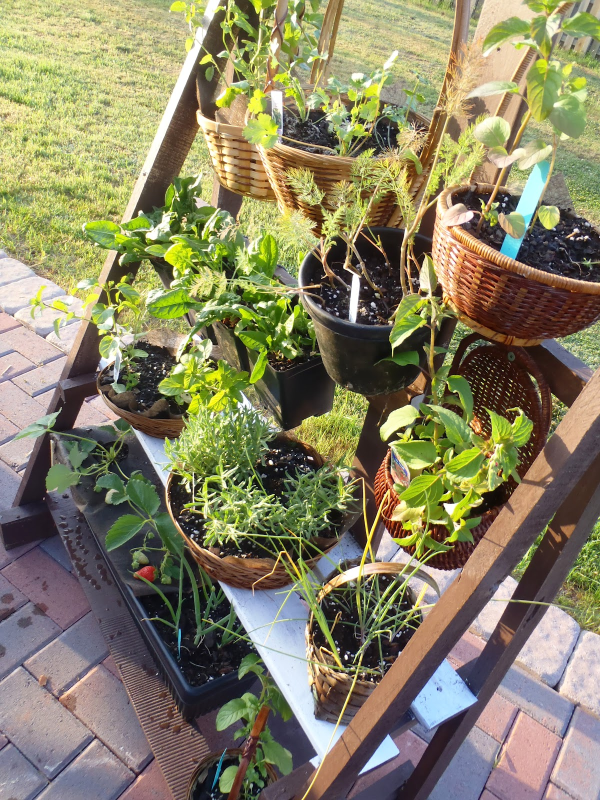 lazy liz on less: simple vertical herb garden
