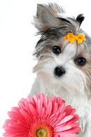 Well groomed pet