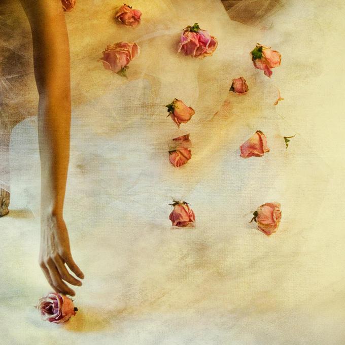 Miriana Mitrovich | Bulgarian-born Canadian photographer | Four Dozen Roses