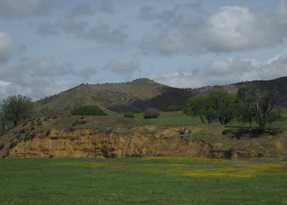 Field with yellow flowers near low cliff, Panoche Road.