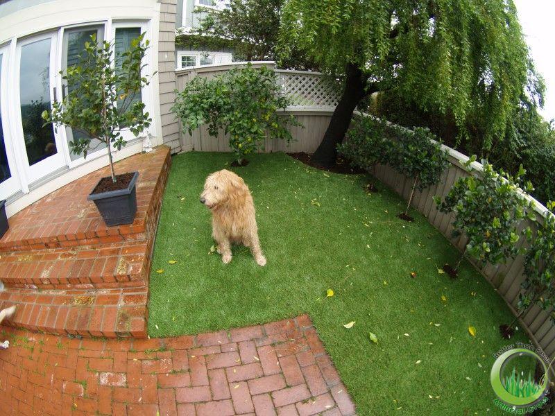 Etolog a familiar un perro no es una flor - Jardin para perros ...