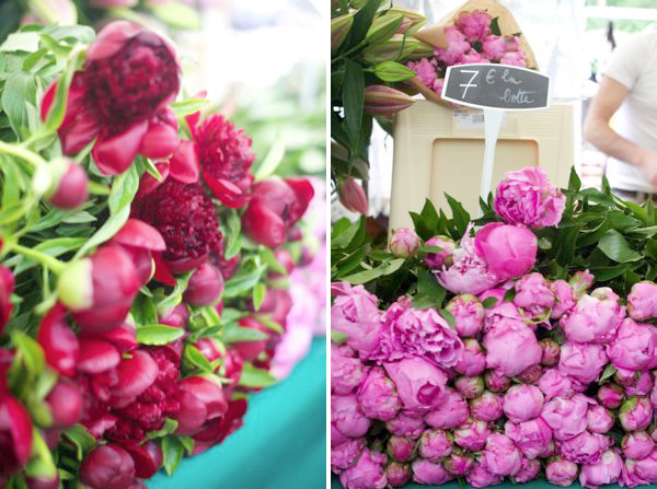 Peonies Season Prepossessing Of Peonies Flowers Season Image