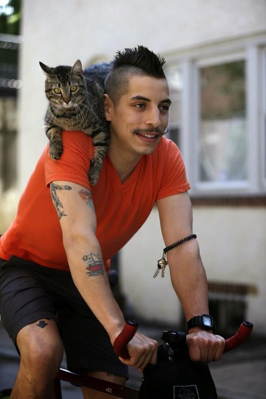 cat_on_bike.jpg