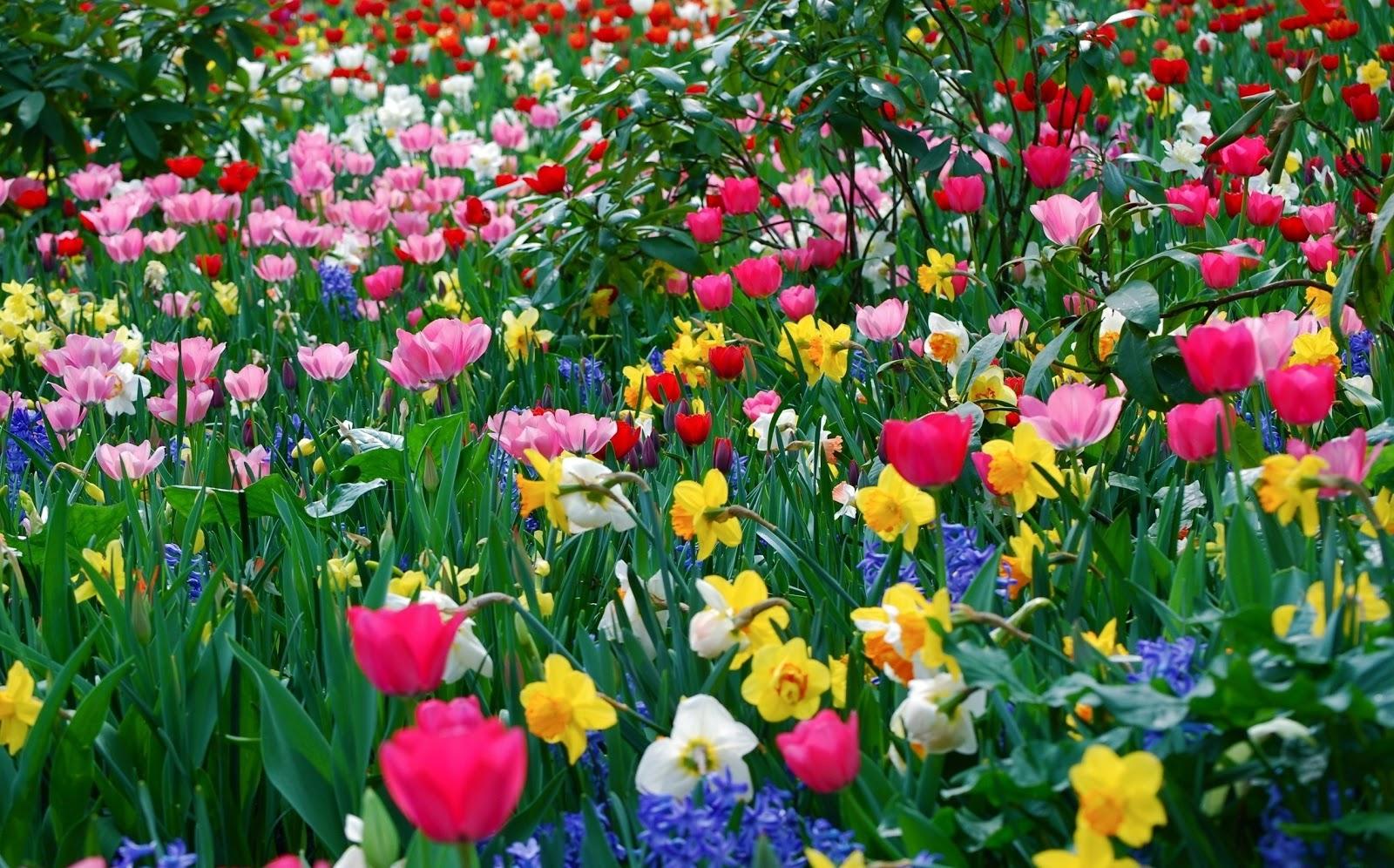 http://2.bp.blogspot.com/-40AJ3pjzpz8/ULdd1WazLKI/AAAAAAAAAnA/5juLrGQ7Hj8/s1600/achtergrond-met-bloemen-in-alle-kleuren.jpg