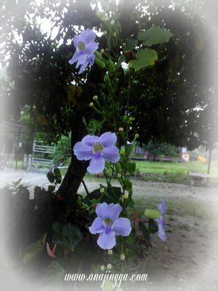 bunga berwarna biru