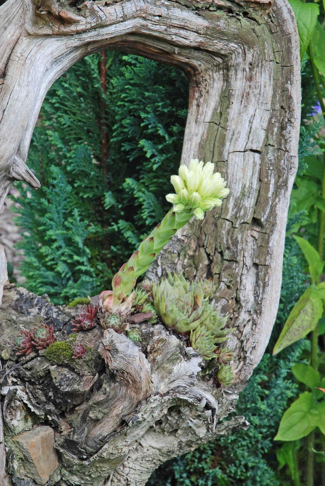 Gartendekoration Aus Altem Holz Rheumricom . Gartendekoration Aus Altem Holz  ...