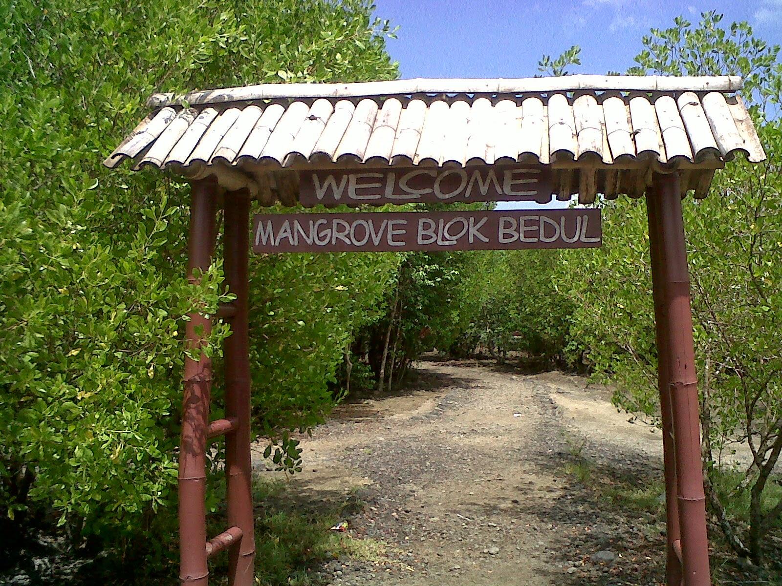 blok bedul mangrove