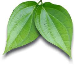 Betel leaf benefits for Traditional Medicine
