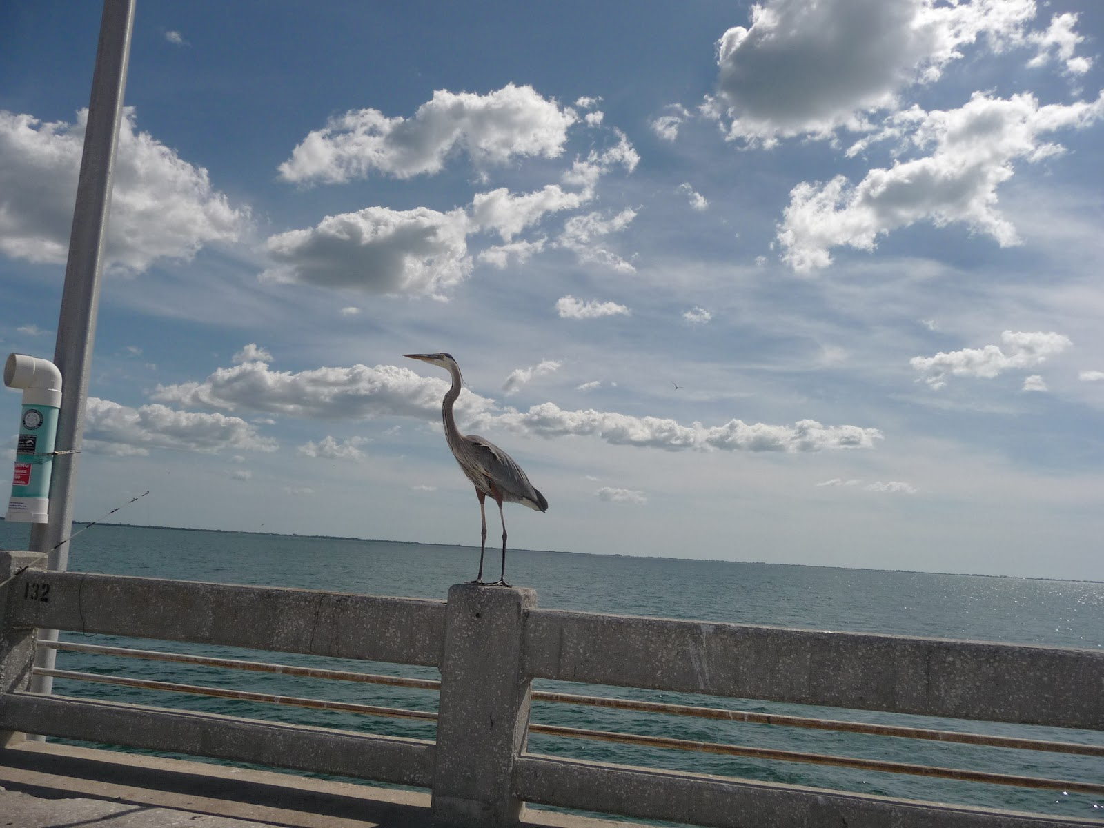 Florida 2012 for Skyway fishing pier state park
