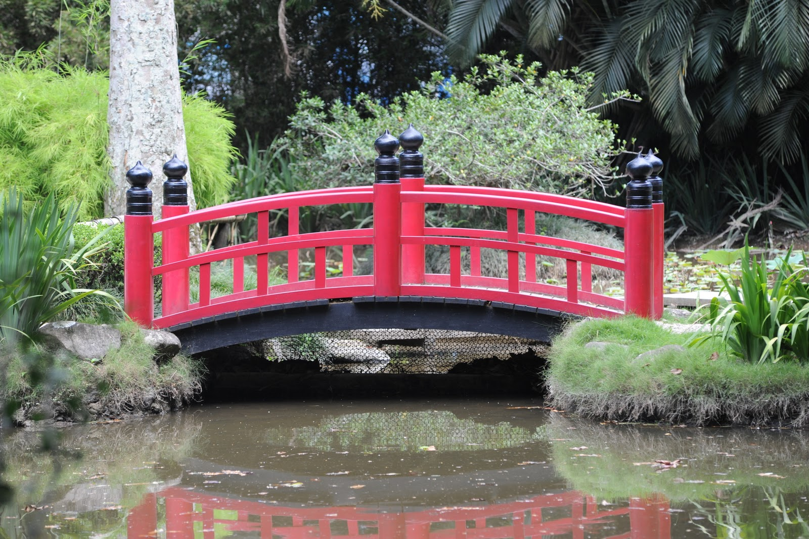 Premier jour a rio de janeiro 2 2 sur les traces de bougainville - Pont du jardin des plantes ...